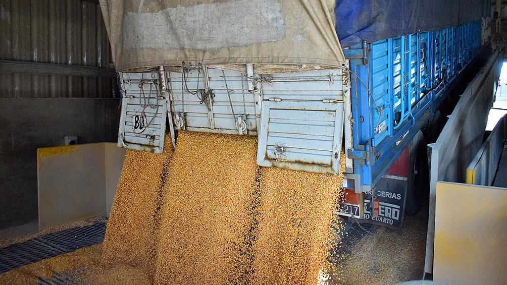 """""""Iniciativa 200 millones de toneladas de cereales, oleaginosas y legumbres"""""""